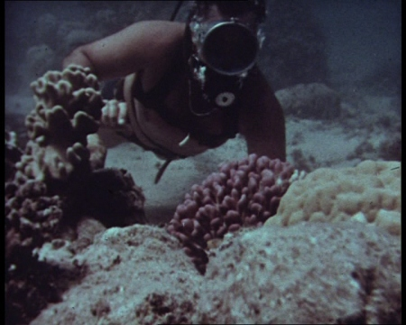 Divers aren't just interested in man-made wrecks. Footage in the archive covers underwater dinosaur bones, marine life and vegetation. There's a reasonable amount of colour clips too.